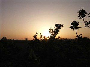 夕阳西下,澳门威尼斯人游戏网站——家乡的美