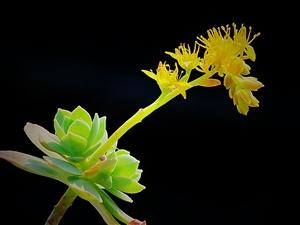 多肉植物是指营养器官肥大的高等植物,作为盆栽品种在各地广受欢迎