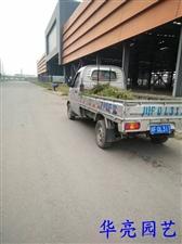 绿化养护篇:草坪修型、除杂草-在青白江量力钢材城劳动的华亮园艺