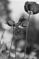 【汉洲悦图】植物写意一组(图片)