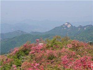 金寨――――-黄狮寨上映山红
