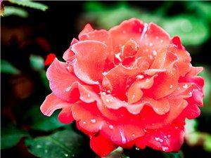 大美就在您身边,想看就去滁州花博园