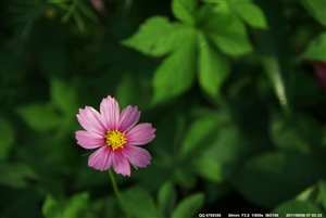 不要错过花期~赏花,赏花,赏花,重要的事情说三遍,广汉赏花(图片)