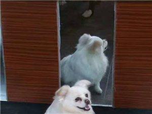 主人盼爱狗回家