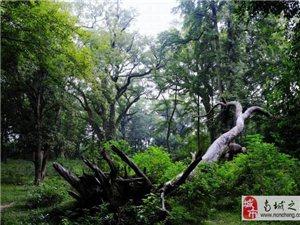 2017年5月14日吉安金�┕帕�-��陂古村一日游