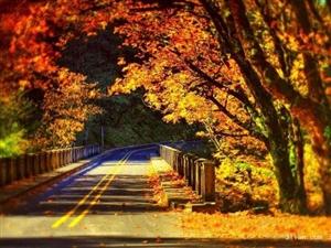 澳门地下官网的林间小路有这么美吗?