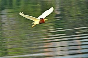 金雁湖岸边冥想: