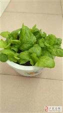 我的绿色蔬菜