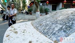 """郑州一道路被称""""天屎之路"""" 树下鸟粪如雨"""