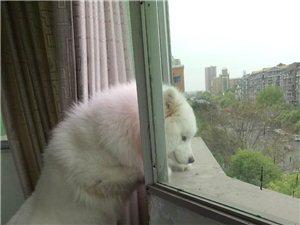 震�@!趁主人不在家,狗狗居然......