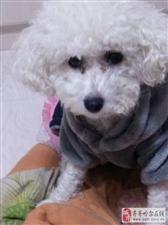 我家的狗丢了 求好心人帮忙找一找