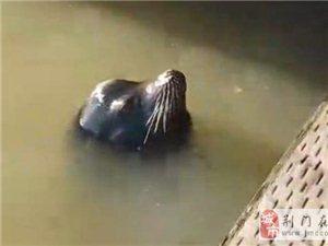小女孩码头边看表演 被海狮突然咬住拽入水中