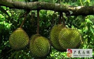原来这些水果是这样长的!