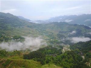 花田早上四点的景色,云雾缭绕、宛如仙境!