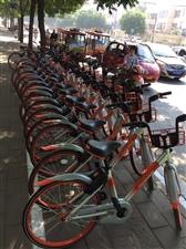 好消息!摩拜单车风靡全泰城!!!