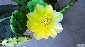 小花也漂亮!小花也漂亮!