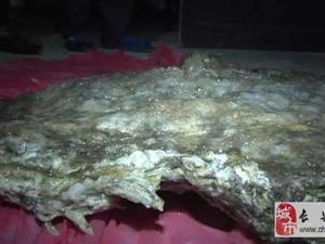 """虹星桥一男子竟在太湖边发现一个重达40多斤的""""太岁"""""""
