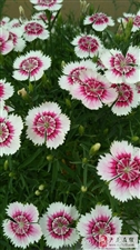 好美的小花儿