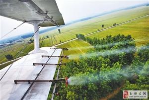 澳门大小点网址县将进行飞机喷药防治美国白蛾作业
