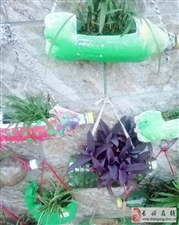 """形色各异的塑料瓶变身""""植物小盆栽"""""""