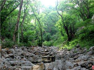 走进原始森林