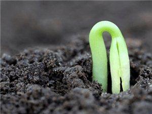 辟谣,这些发了芽的蔬菜不仅可以吃,而且营养还很高!
