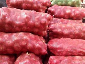 ????因家里种植20余亩洋葱,30余吨洋葱滞销,求收购。