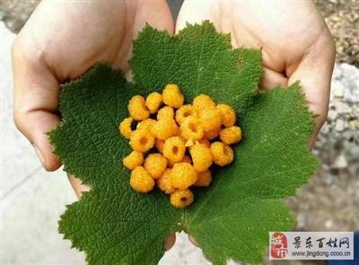 这些颜值非凡的水果,如果连云南人都认不全这就尴尬了