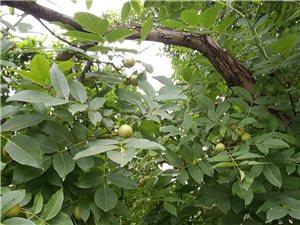 各�N果�洌�想吃的有木有?