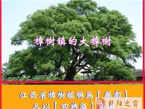 寻找鄱阳县的老乡、老战友蒋和雨、吴春林