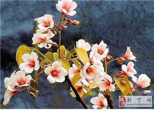 四月桐花处处开