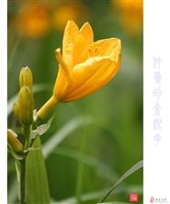 仲夏(蔷薇、萱草、睡莲)拍花