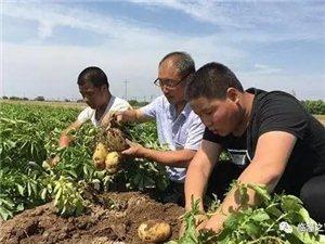 10多�f斤土豆���N;�R潼��疾人急盼客商�やN路