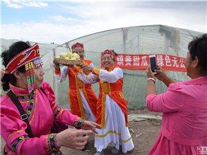镇赉县建平乡甜瓜产业协会带领贫困户种植甜瓜 办起采摘园