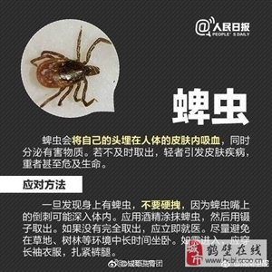 夏季要当心这几种虫类!