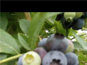 我家�{莓
