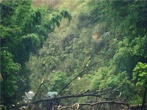 寻乌县城至三标九曲弯路段发生塌方,山体滑坡,造成短时拥堵!