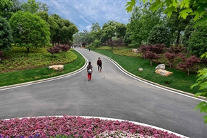 花博园之路