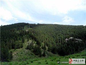 �R�m山原始森林――阿拉善的一片�敉�