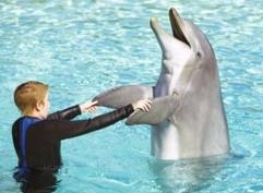 """""""小海豚""""心灵计划"""