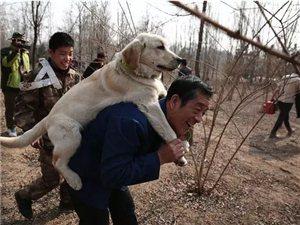 这段中国老人与狗的真实故事,催泪更胜《忠犬八公》
