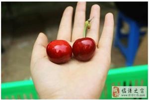 临潼一村一品之代王樱桃,好吃又便宜,错过等一年