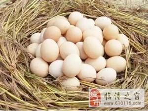 临潼一村一品: 行者芦花鸡蛋