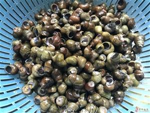 夏季美食――在家做口味螺蛳