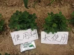 冲施肥如何在花生上使用?