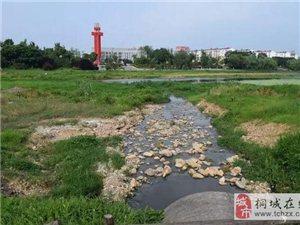 污水直接排到了龙眠河里