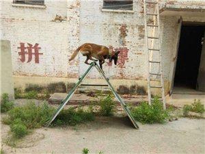 《安徽省公安�d警犬繁育�》面向社���\招合作精英