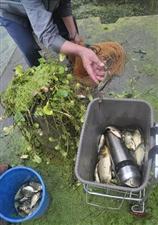 自贡部分河段出现大面积野生鱼浮头或与张化厂污水有关