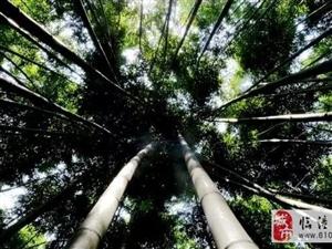 """竹海、瀑布、翠湖…西安近郊竟然藏了一个""""世外桃源""""!"""