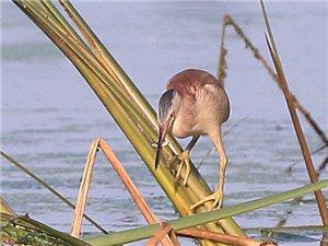 潮白河畔鸟儿鸣